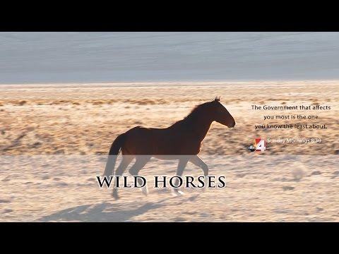 The County Seat   Wild Horses