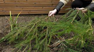 http://tv.ucoz.pl/dir/ogrodnictwo/styczen_w_ogrodzie_kalendarz_ogrodnika_na_11_01_17_01_prace_ogrodnicze_w_styczniu/4-1-0-305
