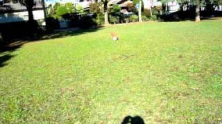 サッカーが大好きで、毎日近所の公園でドリブル練習しているよ! これで...