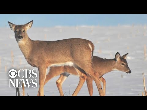 """Zombie deer disease"" spreads to several states"