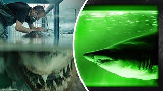 Adam Boş Bir Binada, Büyük Beyaz Köpek Balığı Buldu. Köpek Balığının Orada Ne İşi Vardı?