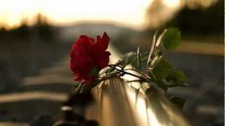Video Fernando Núñez Straub (Doan)- Rosas del Sur - Roses from the south download MP3, 3GP, MP4, WEBM, AVI, FLV November 2018