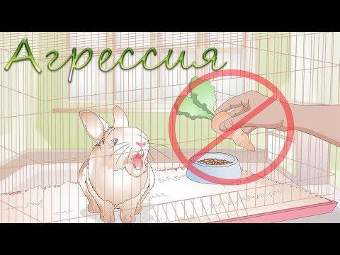 Причины агрессии кролика   Кусается кролик?