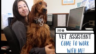 VET ASSISTANT | COME TO WORK WITH ME!