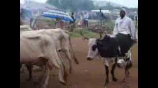 Bangui - Marché à bétail PK13