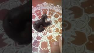 Коты воители Грозового племени! #1.
