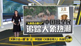 大象迁徙一路向北   中国全民争相围观   八点最热报 11/06/2021