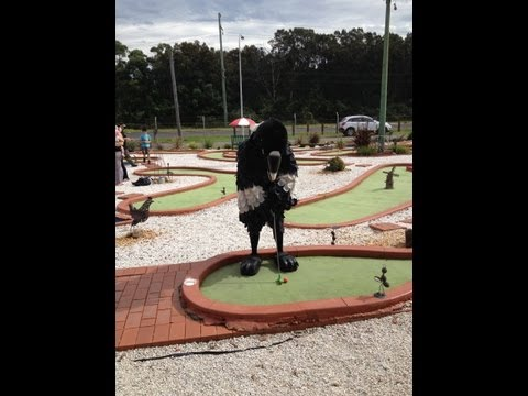 Ever had a golf ball stolen by a magpie at Mini Golf?
