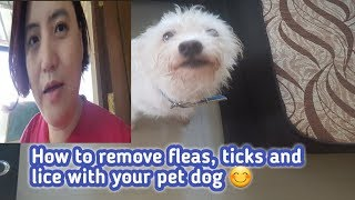 How to remove the fleas,ticks and lice to your pet dog 😊