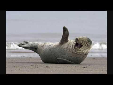 I 25 animali più felici del mondo