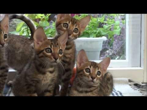 Котята Серенгети - весёлое семейство