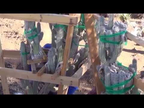 Big Cactus Craning Operations Part 1 of 3