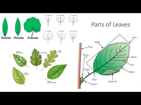 Plant Anatomy and Morphology