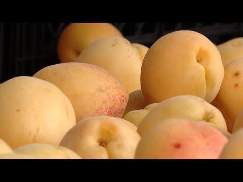 Фруктово-ягодный сезон: сколько стоят черешня и абрикосы на Кубани