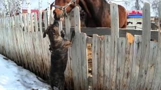 Собака и лошадь (dog and horse)