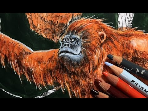 Animorphia Coloring by Kerby Rosanes