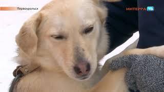Собаки СХ 28 02 19