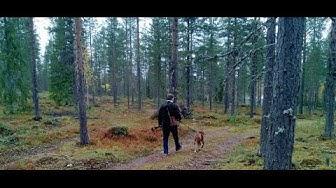 Metsän osto ei kannata!