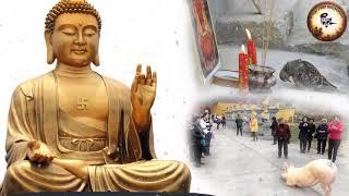 Câu Chuyện Nhân Quả Phật giáo có thật 100% - Súc Sanh Được Vãng Sanh - Kể truyện đêm khuya