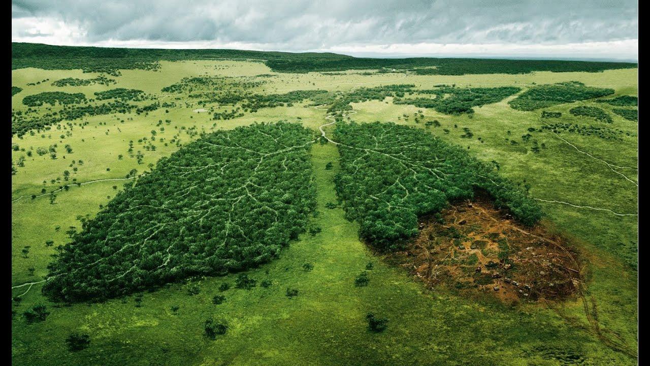 Frases Reflexivas Sobre La Naturaleza Juan Lopresti By
