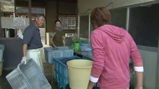 新潟県三条市、「こだわりの枝豆」で全国に知られている「伊部農園」が...