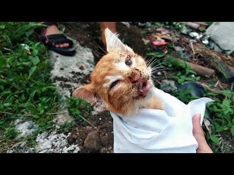 DIKIRA TIDUR, TERNYATA SUDAH MATI! VIDEO PROSESI PEMAKAMAN KUCING SIKUNING (Nobita Vlog)