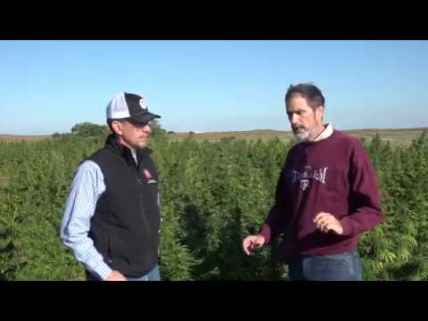 Industrial Hemp Production Overview Video