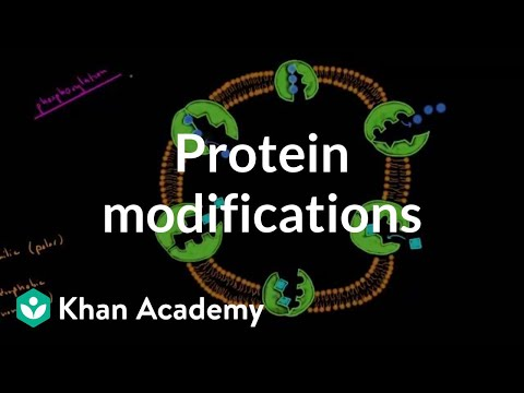 Protein modifications | Biomolecules | MCAT | Khan Academy