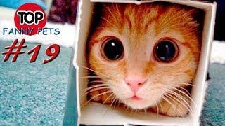 5 МИНУТ СМЕХА, ПРИКОЛЫ 2019, ТОП СМЕШНЫХ ВИДЕО С КОТАМИ/Смешные животные/TOP FUNNY PETS #19