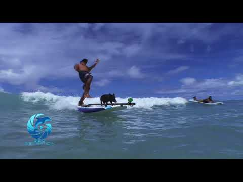 KAMA THE SURFING PIG & KAI WIPEOUT FAIL