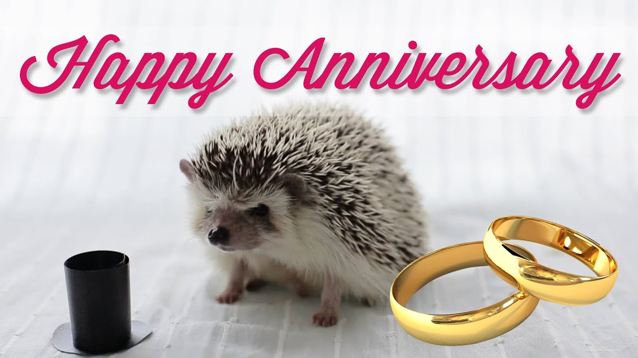 Happy anniversary harley ecard youtube