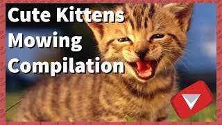 Cute Kittens Meowing Compilation [2017] (TOP 10 VIDEOS)