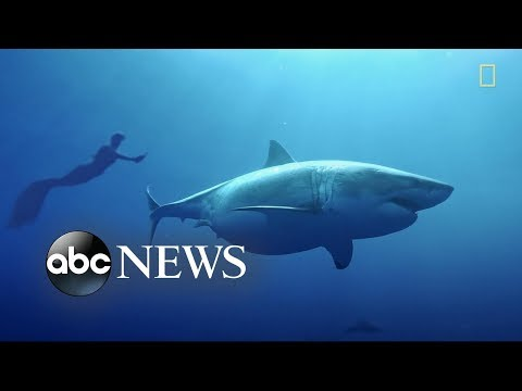 Bill Page - Would You Swim with a Great White Shark?