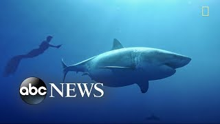 Once In A Lifetime Great White Shark Experience Caught On Tape