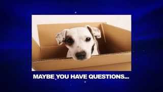 Dog Care | Puppy Care | How To Care For Dogs And Puppies