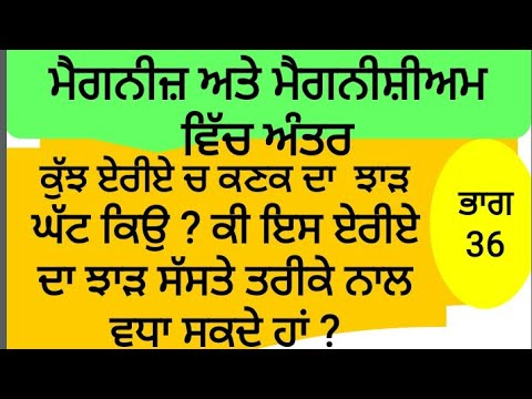 Differance Between Manganese And Magnesium,  How Magnesium Can Increase Yield By Sher Gill Markhai