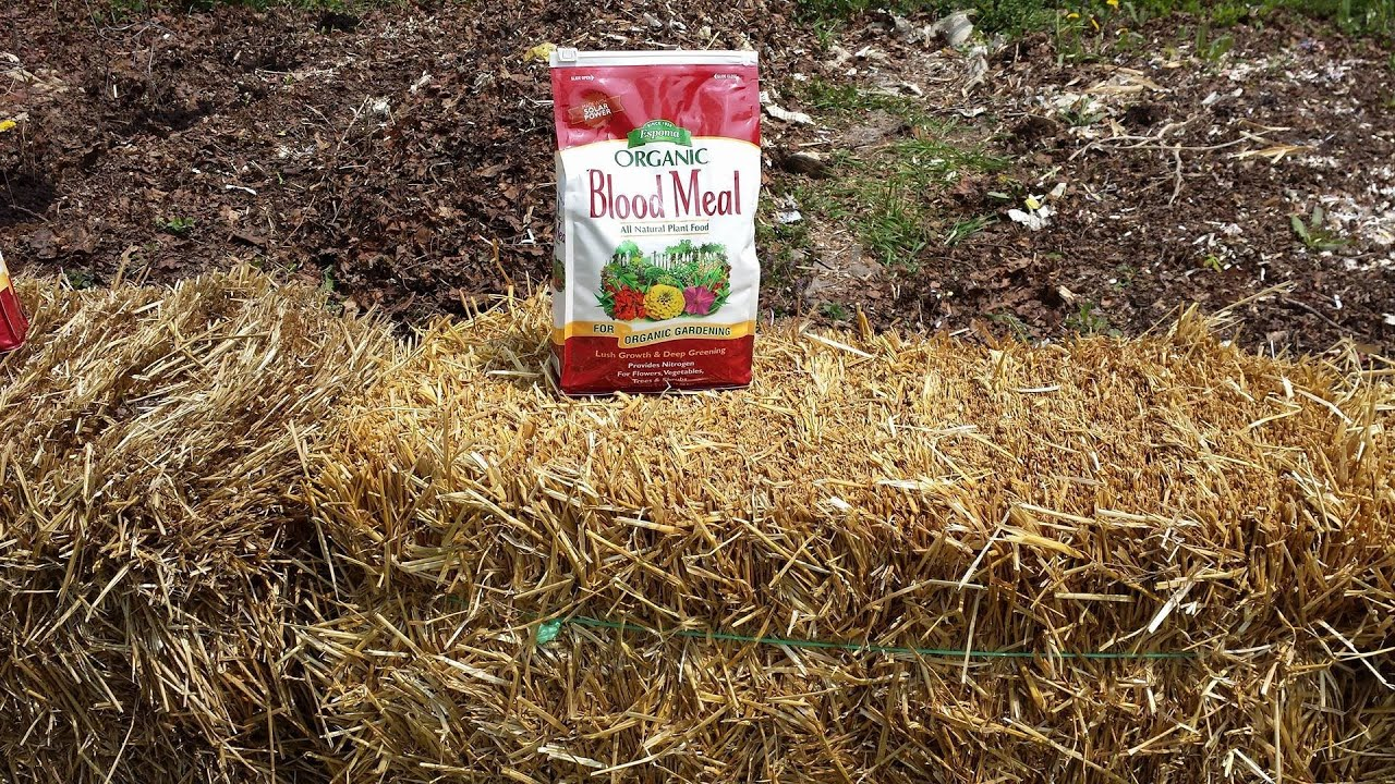 Conditioning Straw bales For Growing Food Garden Tip - YouTube