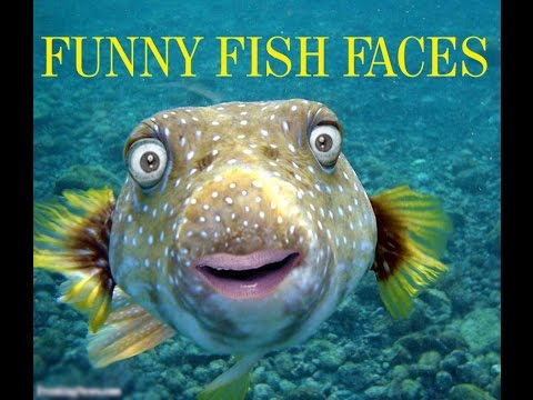 TOP FUNNY FISH FACES ATRANGI DUNIYA - YouTube
