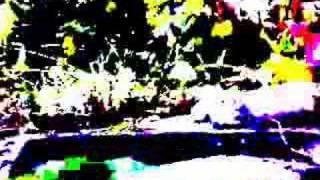 Alice Complaince - Dwarfs und Shrooms