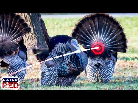 Turkey Hunting With A Bow? Here Are 4 Shot Scenarios & Where To Aim