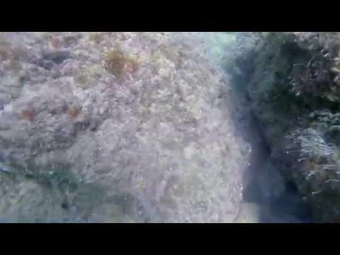 Monopoli diving HD