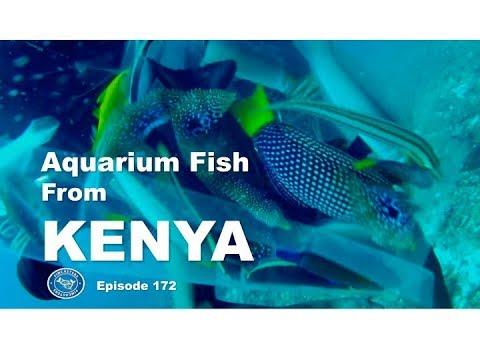 Aquarium fish from Kenya Fincasters Episode 172