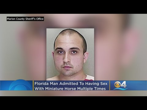 Suzette - Florida Man Arrested For Having Sex With Miniature Horses