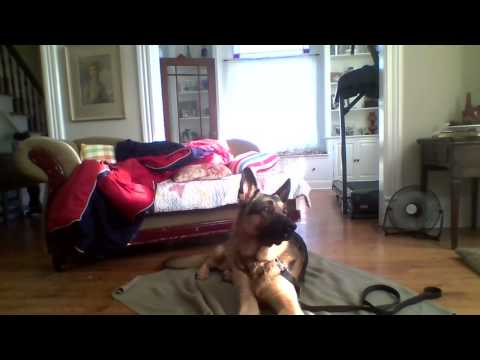 Teach your dog how to Relax - Place Command
