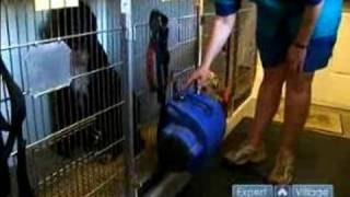 How To Groom A Dog : How To Use A Cage Dryer With Your Dog