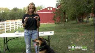 Dog Training - How To Use A Slip Collar