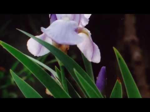 """松田晃演, Akinobu Matsuda """"J.S.Bach Fugue from Lute Suite"""""""