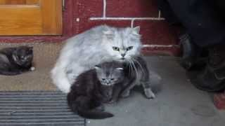 Кошка-мать увидела собаку (Mother cat saw the dog)