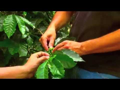 Coffee Farm: Colombia