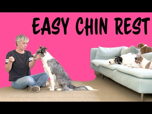 EASY to train Chin Rest - Professional Dog Training